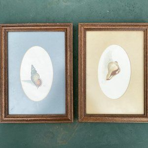 Vintage Pair of Seashell Watercolor Paintings